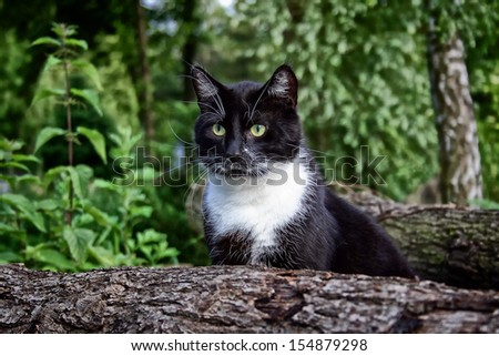 domestic Cat on the Balmy - stock photo