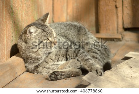 domestic cat on the streets, basking in the sun