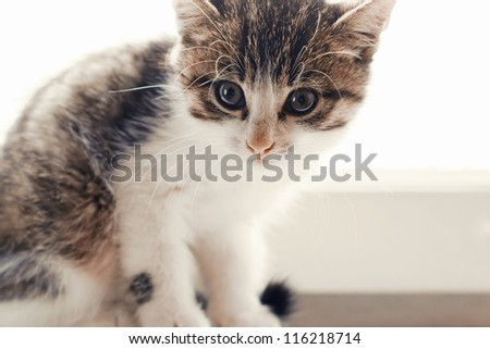 domestic cat sitting on a white window sill - stock photo