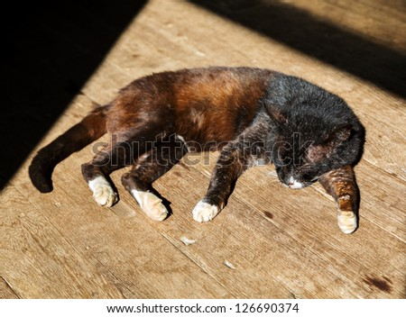 Domestic cat sleeping on wooden floor is basking in sun - stock photo
