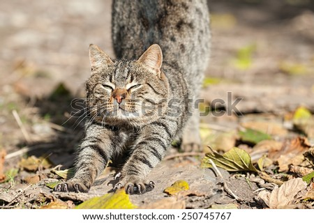 Domestic cat stretching