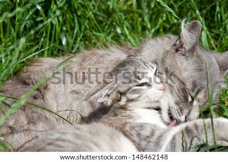 Domestic cat with her kitten - stock photo