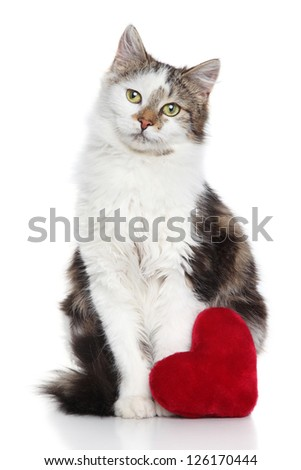 Domestic cat with red valentine heart on a white background - stock photo