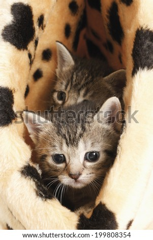 Domestic cats, kittens in basket - stock photo