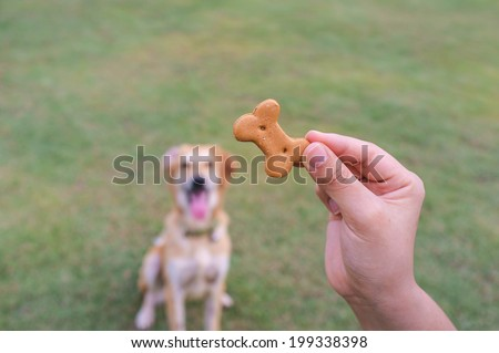 domestic dog waiting for biscuit in the garden - stock photo