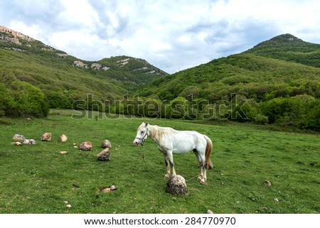 Domestic horse grazing in a mountain valley in the pasture on a background of Crimean mountains.  - stock photo