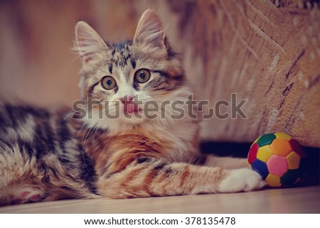 Domestic kitten of a multi-colored color plays with a ball. - stock photo