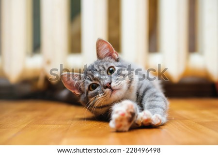 domestic lazy short-haired young whiskered cat lying and stretch oneself - stock photo
