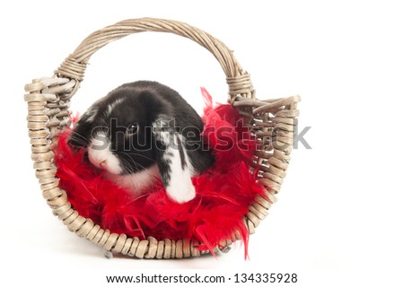 Domestic lop-eared rabbit in a wicker basket with red feathers - stock photo