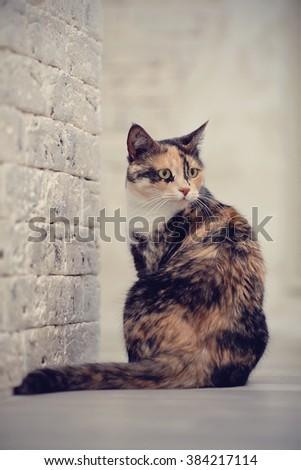Domestic multi-colored cat sits near a brick wall. - stock photo