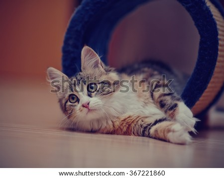 Domestic multi-colored kitten lies on a floor - stock photo