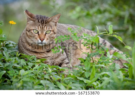 Domestic Short Hair on Grass