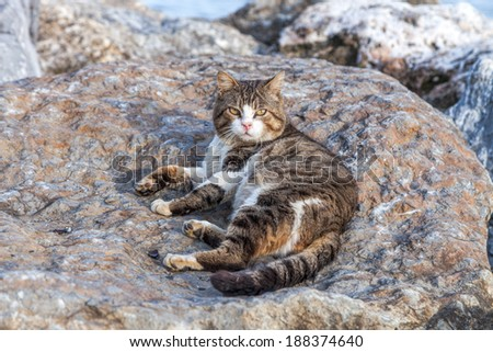 Domestic street cats lying relaxing on the rocks - stock photo