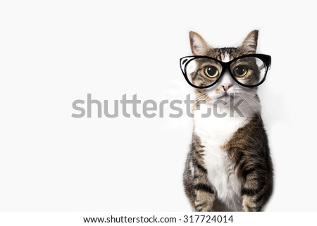 Domestic tabby cat with eyeglasses on a white background. - stock photo