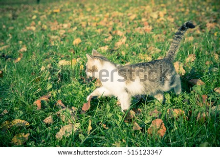 Domestic tomcat among the grass and leaves