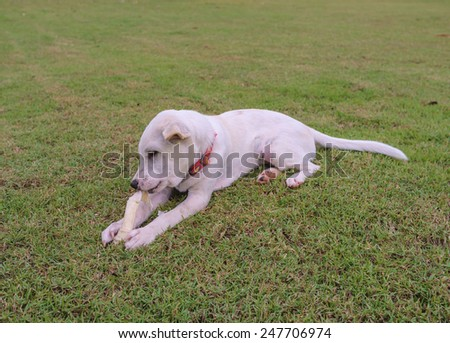 domestic white mixed breed dog playing in the garden - stock photo