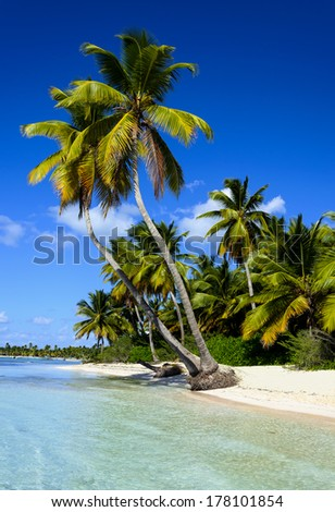 Dominican Republic beach with exotic palms - stock photo