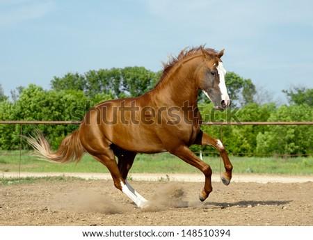 don stallion - stock photo
