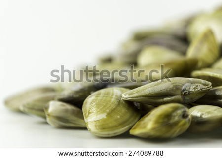 Donax trunculus, an edible species of saltwater clam, a bivalve in the family Donacidae. Is native to the Mediterranean and Atlantic coasts of western Europe. Harvest in South Portugal Atlantic cost. - stock photo