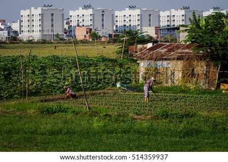 Dong Nai, Vietnam - April 26, 2015: Farmers are working on flowers field with buildings in the background