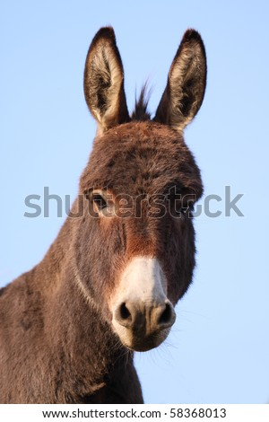 Donkey Head Stock Photos Images Amp Pictures Shutterstock