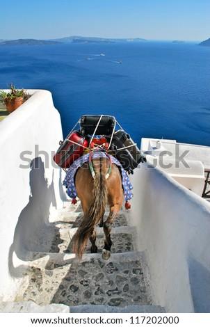 Donkey as a transportation in Santorini - stock photo