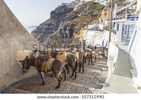 donkey at the port of Fira in Santorini, Greece - stock photo