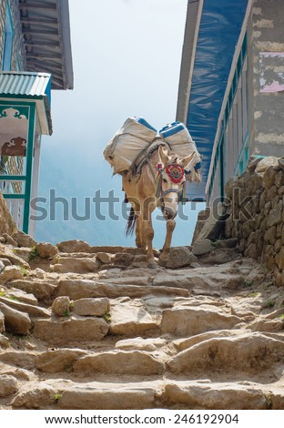 Donkey caravan in mountains in the village, Sagarmatha National Park, Nepal  - stock photo