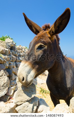Donkey from the Greek island of Santorini