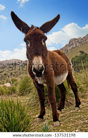 Donkey in a barren rocky landscape - stock photo
