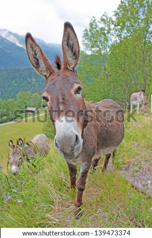 Donkey in a Field in sunny day - stock photo