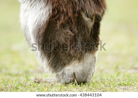 donkey in a field  in sunny day, nature series - stock photo