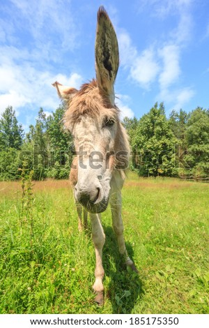 Donkey in a Field of yellow Flowers in sunny day - stock photo