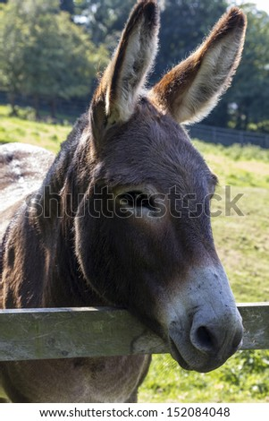 Donkey in field.