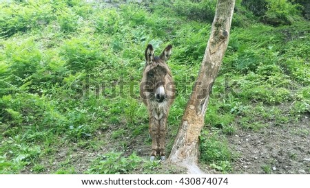 Donkey in forest.