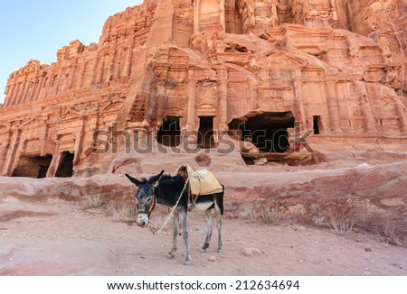 Donkey in front of ancient buildings in Petra at sunrise - stock photo