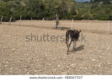 Donkey in the Mediterranea countryside in the south of Italy