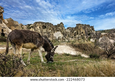 Donkey in the mountains, Turkey