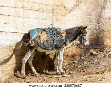 Donkey in the street in Moulay Idriss, the holy town in Morocco, named after Moulay Idriss I arrived in 789 bringing the religion of Islam