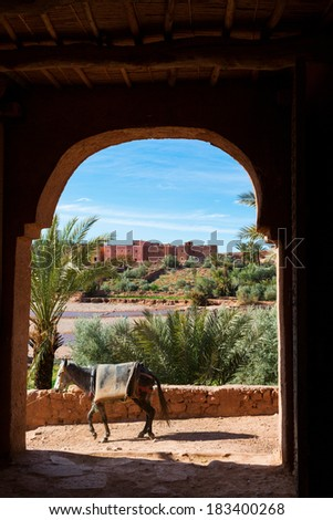 Donkey in traditional door in Morocco - stock photo
