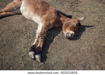 Donkey is sleeping on the grass