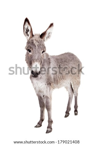 Donkey stock photos royalty free images vectors for Burro blanco