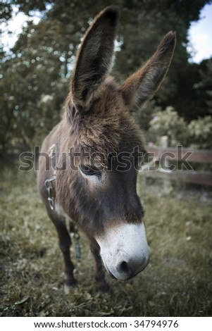 Donkey looking sad with a chain around his neck