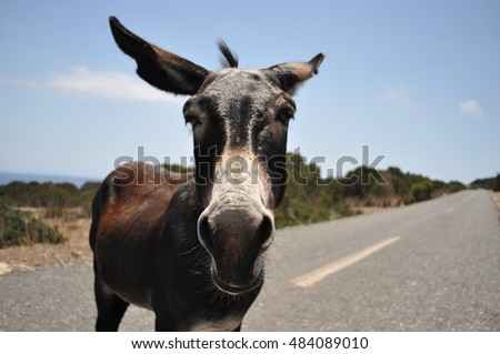 Donkey of Northern Cyprus. Beautiful portrait of a donkey. Karpasia peninsula - the protected zone. The best and Funny donkey photo. Northern Cyprus - Dipkarpaz. Donkey on a sky background.