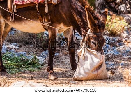 donkey on Crete, Greece - stock photo