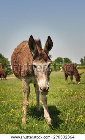 Horse Front View Stock Images Royalty Free Images