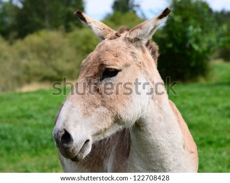 Donkey poses in the zoo - stock photo