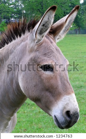Donkey Profile Stock Images Royalty Free Images Amp Vectors
