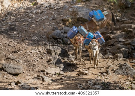 Donkeys are carrying goods, most found throughout the Himalaya region.