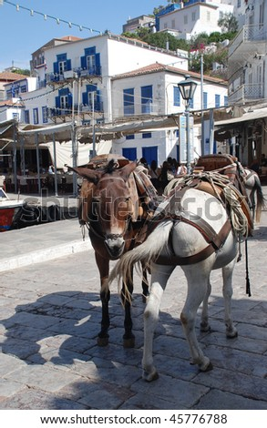 Donkeys on the island of Hydra